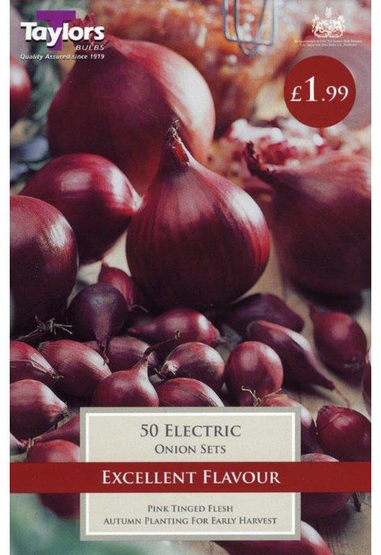autumn-planting-onions