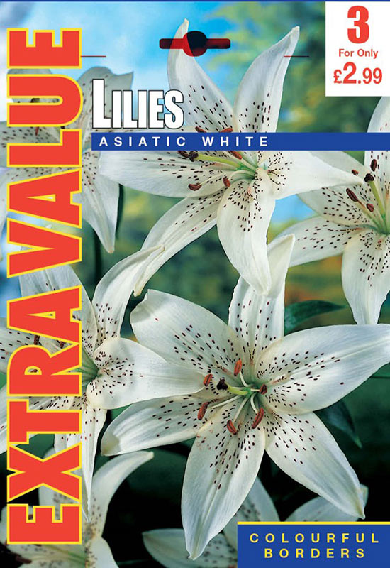 summer-flowering-bulbs-lilies-asiatic-white