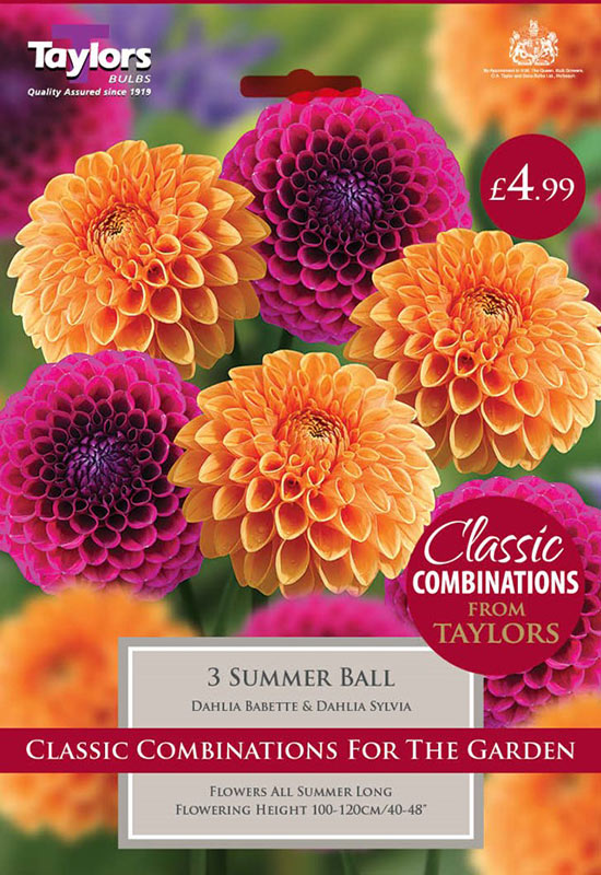 summer-flowering-bulbs-summer-ball-2
