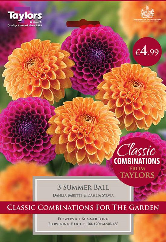 summer-flowering-bulbs-summer-ball-2
