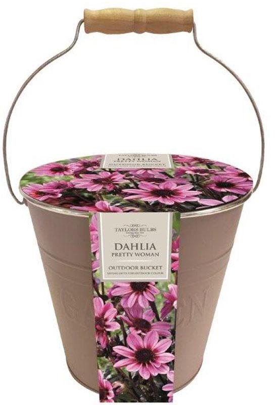 dahlia-bucket