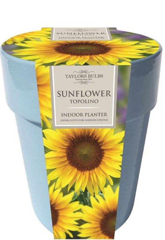 sunflower-pot